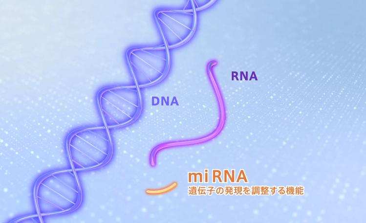 miRNA解析を可能にする3D-Gene®(ダイジェスト)